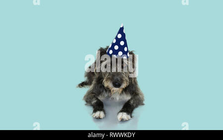 FUNNY BLACK DOG CELEBRATING A BIRTHDAY, CARNIVAL  OR NEW YEAR WITH A BLUE AND WHITE POLKA DOT PARTY HAT LYING DOWN. ISOLATED AGAINST BLUE PASTEL BACKG - Stock Photo