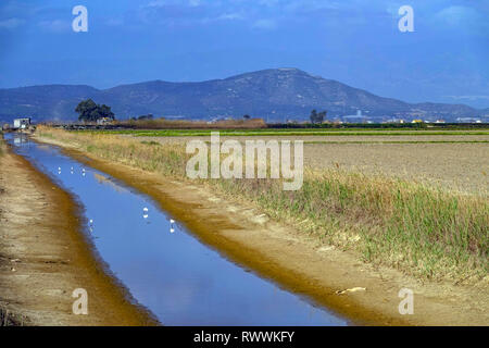 Wide open spaces, lakes and reed-beds, The Ebro Delta nature reserve, near Amposta, Catalunya, Spain - Stock Photo