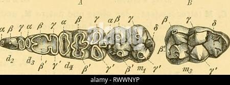 Elemente der paläontologie bearbeitet (1890) - Stock Photo