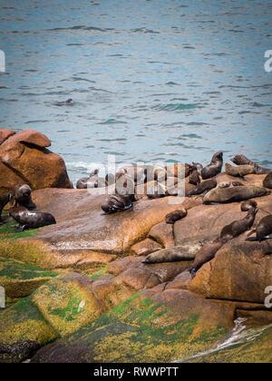 Sea wolves on the rocks in Cabo Polonio, coast of Uruguay rocks and sun - Stock Photo