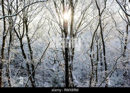 Snow covered greenbelt woodland - Stock Photo