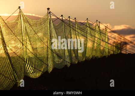 Schkeuditz, Germany. 07th Mar, 2019. Snow fences stand on a field while the sun goes down. Credit: Sebastian Willnow/dpa-Zentralbild/dpa/Alamy Live News - Stock Photo