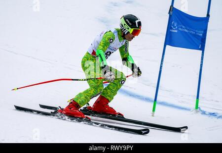Krasnoyarsk, Russia. 8th Mar, 2019. China's Zheng Wenbo competes during the men's giant slalom of Alpine Skiing at the 29th Winter Universiade in Krasnoyarsk, Russia, March 8, 2019. Credit: Jiang Wenyao/Xinhua/Alamy Live News - Stock Photo