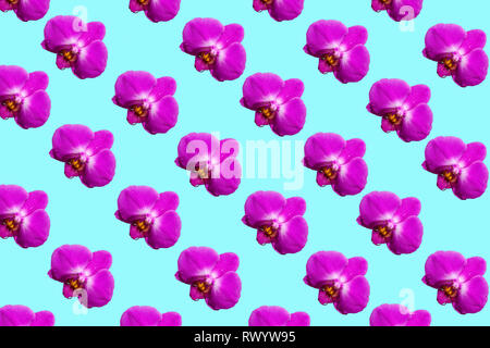 Purple orchid flowers isolated on pastel background. Tropical floral pattern. Flat lay - Stock Photo