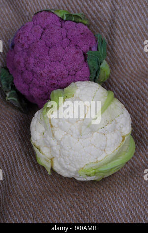 Fresh organic vegetables. Cauliflower - Stock Photo