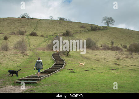 Woman with dogs climbing the steps up St Catherine's Hill near Winchester in the South Downs National Park, Hampshire, UK - Stock Photo