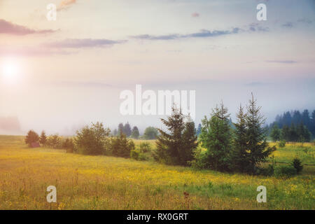 Fantastic day with fresh blooming hills in warm sunlight. Dramatic and picturesque morning scene. Location place: Carpathian, Ukraine, Europe. Artisti - Stock Photo