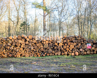 a pile of cut sawn logged felled tree trees in background timber log logs seasoning with warning sign for forestry industry - Stock Photo