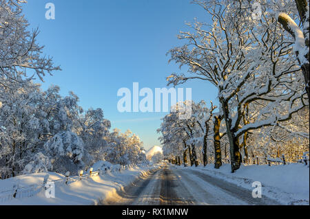 Snow covered trees overhanging the main road between Stonyburn and Fauldhouse, West Lothian. - Stock Photo