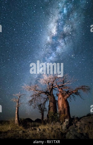 Baobab tree under the milky way at midnight on Kubu Island, Botswana. - Stock Photo