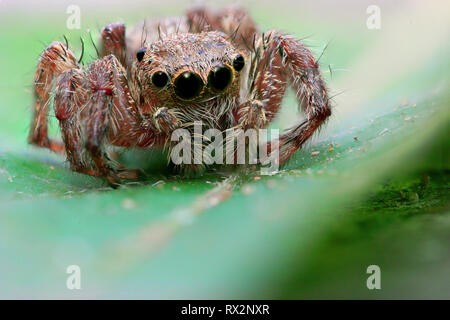 Spider on the leaf - Stock Photo