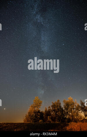 the Milky Way above the trees - Stock Photo