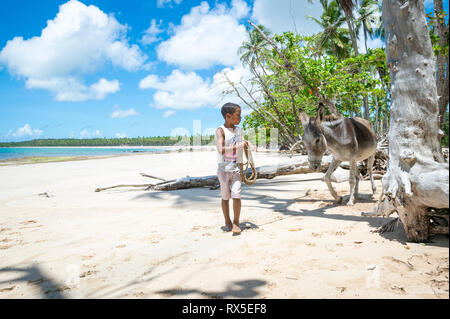 BAHIA, BRAZIL - MARCH 11, 2017: A working mule stands with a young Brazilian boy on the palm fringed shore of a beach in the remote Nordeste region. - Stock Photo