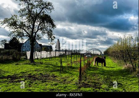Laendliches Ruhrgebiet mit Wiesen im Herbst bei interessanter Lichtstimmung in Muelheim Ruhr. Grasende Pferde auf einer Koppel. - Stock Photo