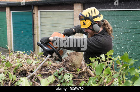 An Arborist or tree surgeon uses a chainsaw on a tree.The tree Surgeon is wearing chainsaw safety equipment. Motion blur of the sawdust and chippings. - Stock Photo