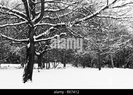 monochrome landscape of a woodland scene in winter showing outlines of trees and branches against a white background of snow. Stock Photo