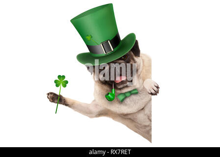 st patricks day pug puppy dog with green leprechaun hat and pipe, holding up shamrock clover, smiling sideways, isolated on white background - Stock Photo