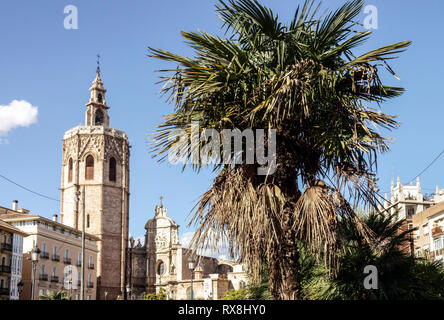 Valencia, Medieval El Micalet bell tower at Cathedral, Palm tree, Plaza de la Reina, Old Town, Spain - Stock Photo