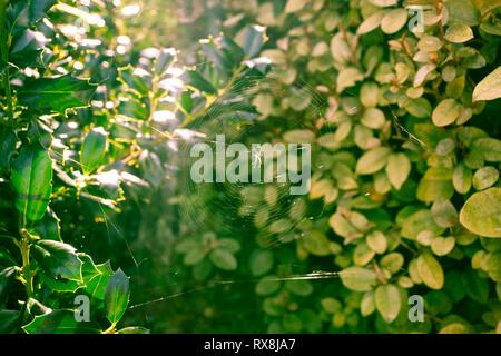 Sun Rays Shining Through Green Bush Leaves Forest - Stock Photo
