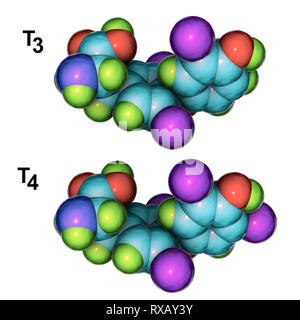 Triiodothyronine and thyroxine hormone, molecular models - Stock Photo