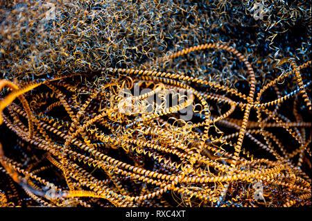 Spiral of metal swarf, waste from an engineering machine workshop - Stock Photo