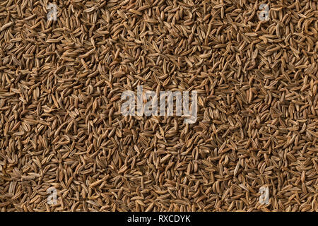 Dried organic Caraway seeds full frame - Stock Photo
