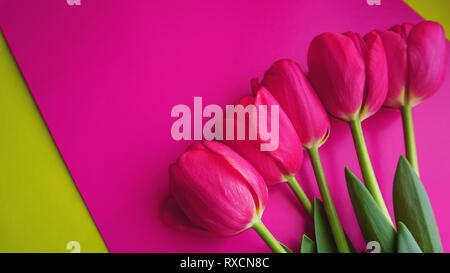 Pink tulips on pink background. Text space image. Spring concept - Stock Photo