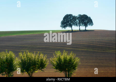Three trees stand together on top of an agricultural hillside and three sand at the bottom of the hill under overcast skies - Stock Photo