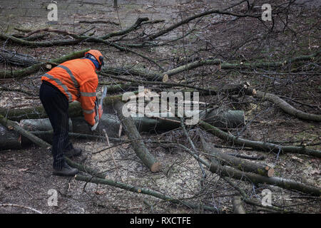 Worker with orange vest, helmet and chainsaw cutting a tree on the yard to small piecies ready for transport - Stock Photo