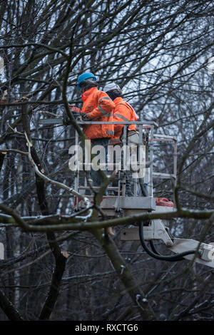 Two workers with a chainsaw on a crane platform cutting down a tree branches in forest park - Stock Photo
