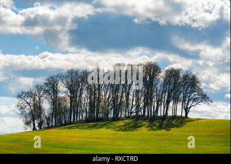 Agriculture land on a a hillside with a grove of trees on the top lit by the sun, under cloudy skies - Stock Photo