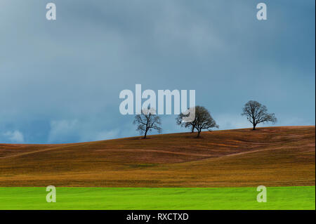 Minimalist of sparse trees stand on rolling agriculture hills under cloudy skies - Stock Photo