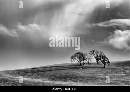 Black and white minimalist of four trees on a rolling agricultural field under clouds dispensing rain. - Stock Photo