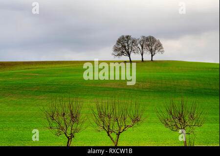 Three trees stand on top of an agricultural hillside under cloudy skies while three more stand at the bottom of the hillside. - Stock Photo