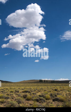 A desolate, vast plain under a deep blue sky and puffy white clouds. Some trees can be seen in the distance. - Stock Photo