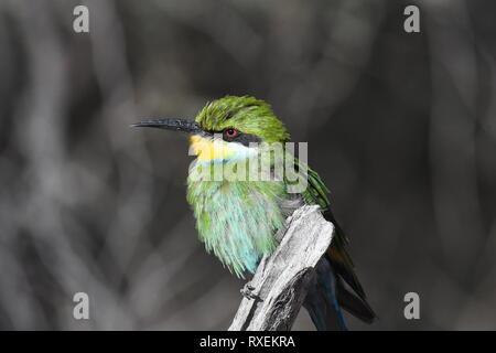 Safari, Kgalagadi Transfrontier Park, Namibia - Stock Photo
