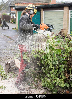 Arborist or Tree Surgeon sawing up a tree covered in sawdust.The tree Surgeon is wearing chainsaw safety equipment. Motion blur of the sawdust and chi - Stock Photo