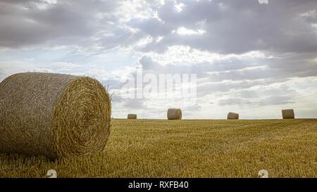 Strohballen in der Hallertau - Stock Photo