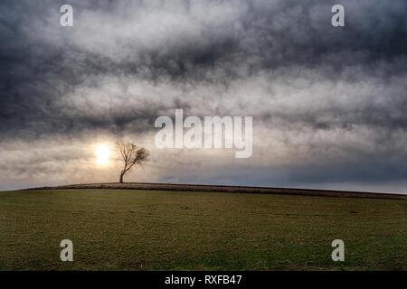 Einzelner Baum auf freiem Feld - Stock Photo