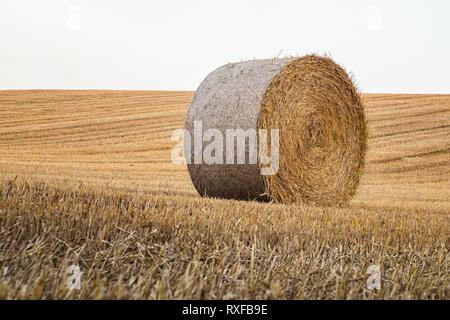 Einzeln stehender Strohballen in der Hallertau - Stock Photo