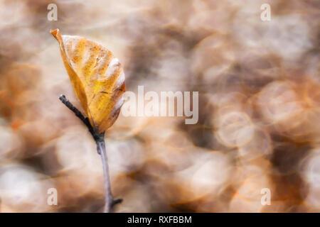Einzelnes Laub, Blatt an einem Zweig im Sonnenlicht, strukturiertes Altglas Bokeh - Stock Photo