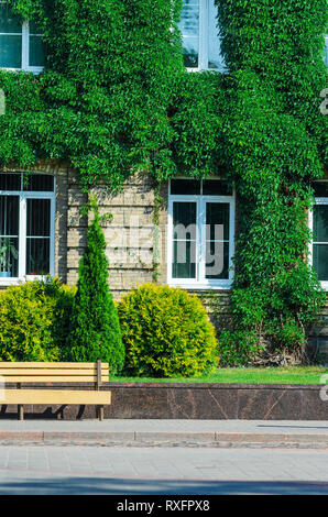 The Urban Invironment- Wooden Bench in Front of the Brick Facade of an Old Building Covered with Ivy. Elements of Beautification in Architecture. livi - Stock Photo