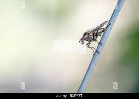 Fliege auf dem Maschendrahtzaun - Altglas-Fotografie mit dem Trioplan 100mm f2.8 - Stock Photo