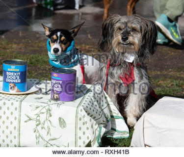 London, UK. 10th Mar 2019. The second Wooferendum event. A light hearted protest for the serious matter of Brexit. Dog owners were encouraged to take their dogs for a walk around Parliament Square to say that 'that Brexit is a dog's dinner ' London, Great Britain, 10 Mar 2019  Credit: David Nash/Alamy Live News - Stock Photo