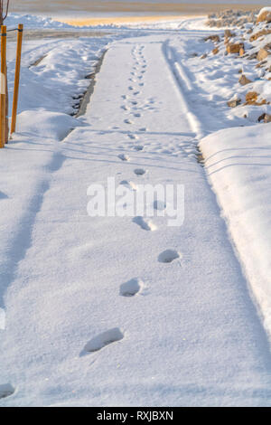 Footprints on the snow covered pathway in Utah - Stock Photo
