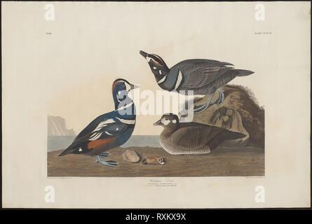 Harlequin Duck. Robert Havell (English, 1793-1878); after John James Audubon (American, 1785-1851). Date: 1825-1839. Dimensions: 525 x 717 mm (plate); 655 x 979 mm (sheet). Hand-colored engraving with aquatint and etching on ivory wove paper. Origin: United Kingdom. Museum: The Chicago Art Institute. - Stock Photo