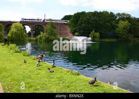 Train travelling over the railway bridge in Central Park, Chelmsford, Essex, UK. Sunshine. Ducks, coot, goose beside the lake and fountain. - Stock Photo