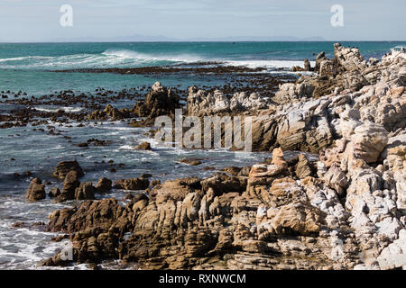 colony of African penguin, Spheniscus demersus, standing in Betty's Bay, South Africa - Stock Photo