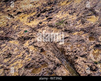 Mountain bike tyre tread pattern in mud, Kilburn Forest, North Yorkshire, UK. - Stock Photo