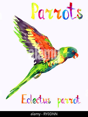Eclectus parrot (Eclectus roratus) male parrot, isolated hand painted watercolor illustration with handwritten inscription - Stock Photo
